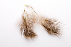 Feather. Stock Images