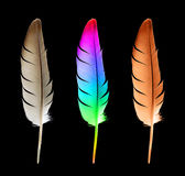 Feather (clipping Path) Stock Photos