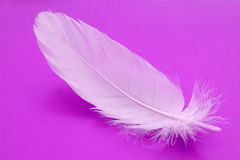 Feather close-up Royalty Free Stock Image