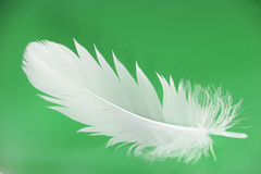 Feather close-up. Small feather close-up on a green background Stock Photography