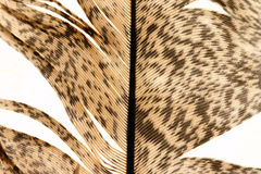 Feather close-up 7 Royalty Free Stock Image