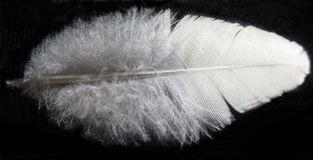 Feather, Close Up, Material, Wing Stock Images