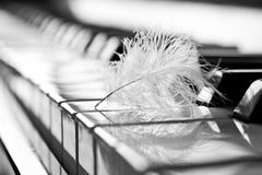 Feather closeup on piano keyboard. In black and white Stock Photography