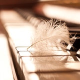 Feather closeup on piano keyboard Royalty Free Stock Images