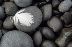 Feather on cobblestones Stock Photos
