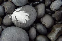 Feather on cobblestones Stock Photos