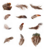 Feather Collection stock photos