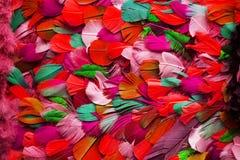 Feather Color Texture Stock Photos