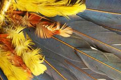 feather color texture Stock Photos