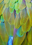 Feather colors - green and blue royalty free stock photo