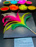 Feather from crown of native american indians. Feather crown and traditional clothes of of native America indian in Bolivia, La Paz museum stock images
