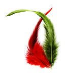 Feather dance. Red and green feathers dancing against a white background Stock Images