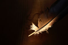 Feather On Dark Royalty Free Stock Images