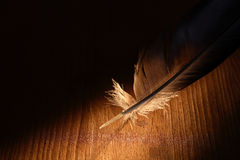 Feather On Dark Stock Image