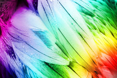 Feather Detail - Colorful Bird Feathers. Royalty Free Stock Image