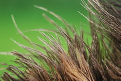 Feather details royalty free stock images