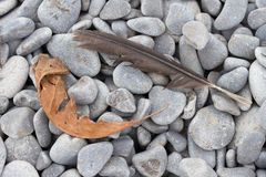 Feather and Dried Leaf on Cobblestones Stock Photo