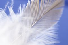 Feather Drop. Feather abstract background royalty free stock photography
