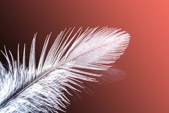 A feather with a drop of water macro. Close up in the natural color of the living coral - the color of the year 2019 stock photo