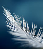 Feather with drops Stock Photography