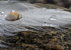 Feather and drops on the beach. Feather and shell on the stone Royalty Free Stock Images