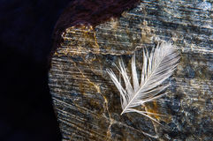 Feather with drops of water, lying on a stone Stock Photos