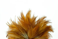Feather duster Royalty Free Stock Photos