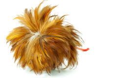 Feather duster Stock Photos