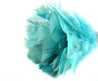 Feather Duster Stock Photography