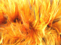 Feather Duster Background. A background with a closeup view of a bright orange pattern of a feather cluster Royalty Free Stock Image