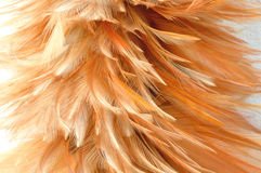 Feather duster on cement background Stock Photos