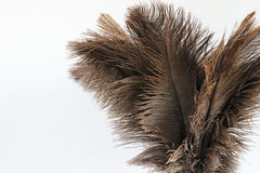 Feather duster close-up on a white background. Close-up of a feather duster comprising ostrich feathers isolated on a white background. Copyspace on the left of Stock Photo