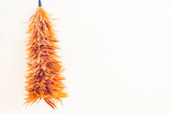 Feather duster on  concrete wall background Stock Photos