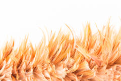 Feather duster on  concrete wall background Royalty Free Stock Photography