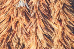 Feather duster texture use for background. Abstract feather duster texture use for background Stock Photos