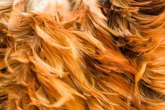 Feather Duster tool Royalty Free Stock Photo