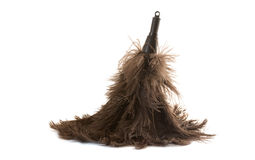Feather Duster on White. A feather duster against white Royalty Free Stock Image