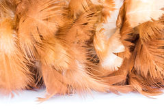 Feather duster on white background Stock Images