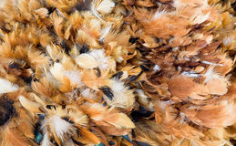 Feather Duster Royalty Free Stock Image