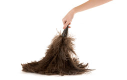 Feather Dusting Royalty Free Stock Photo