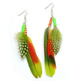 Feather earrings. (parrot, pintado) isolated on white background Royalty Free Stock Image