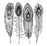 Feather with eyes Stock Photo