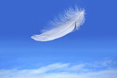 Feather falling from blue sky Stock Photography