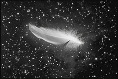 Feather falling from night sky Stock Images