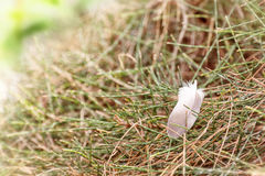 Feather falling on the pine Stock Images