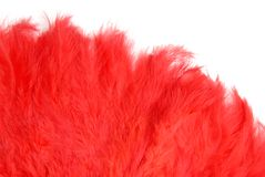 Feather Fan Stock Image