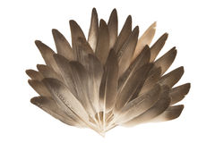 Feather fan Stock Photo