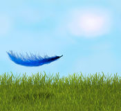 Feather in the field Royalty Free Stock Photography