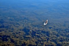 Feather floating on calm, lake water.