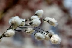 Feather, Flora, Close Up, Branch Royalty Free Stock Images